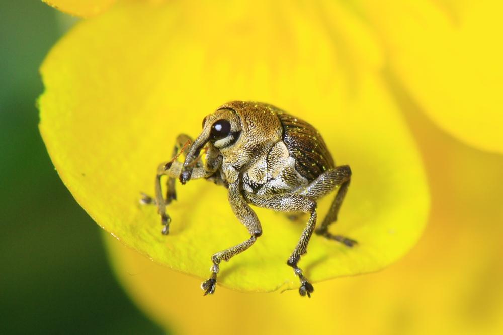 http://lemondedewilly.free.fr/albums/macro/Insectes/Macro0001.JPG