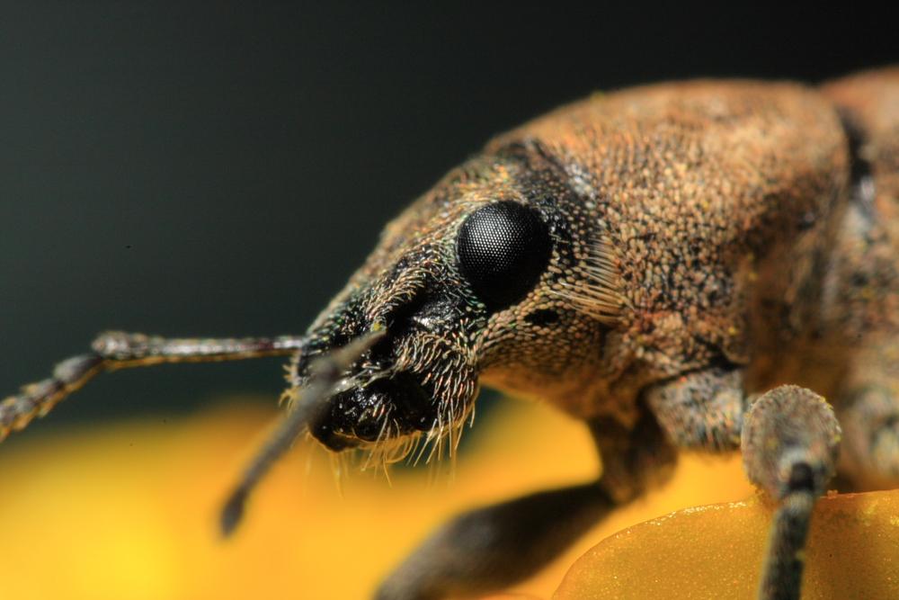 http://lemondedewilly.free.fr/albums/macro/Insectes/macro0020.JPG