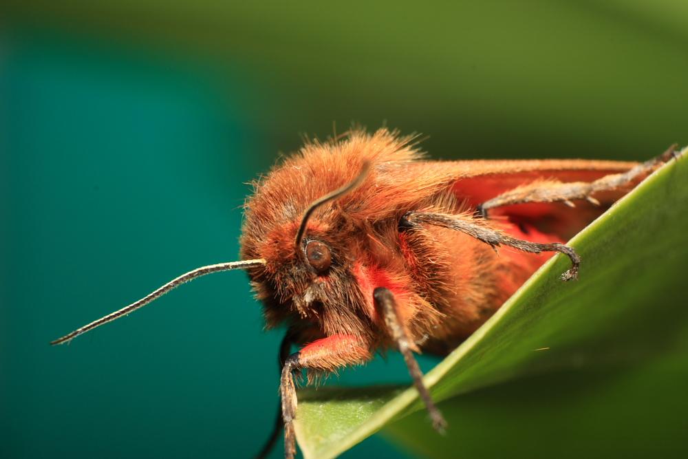 http://lemondedewilly.free.fr/albums/macro/Insectes/macro0024.JPG