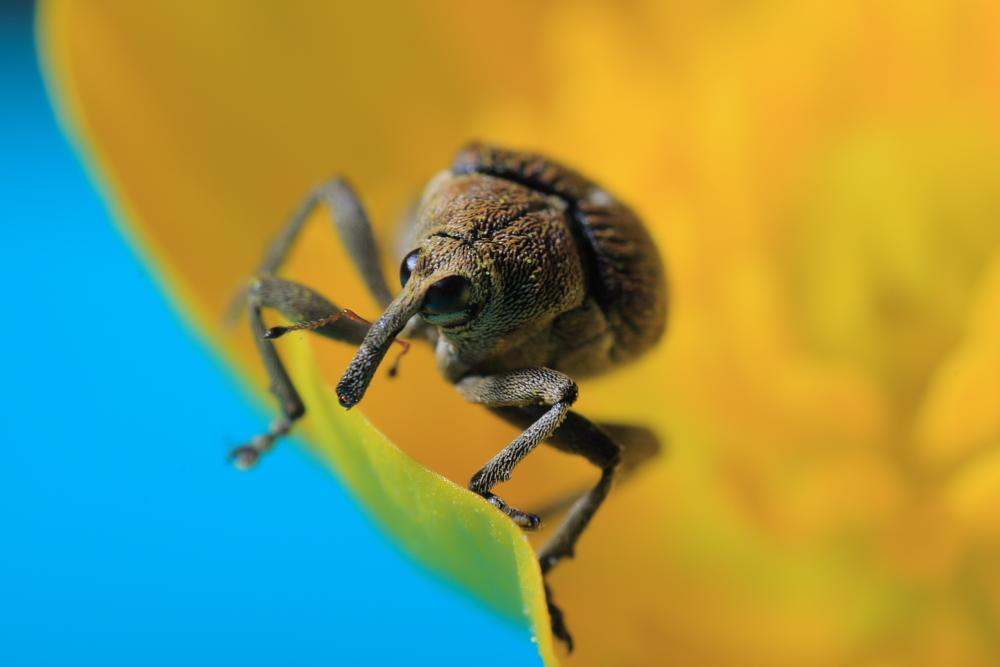 http://lemondedewilly.free.fr/albums/macro/Insectes/macros0012.JPG